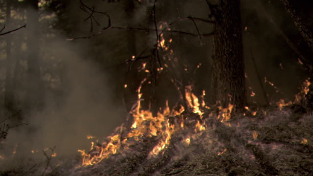 Slow motion shots of a forest fire burning