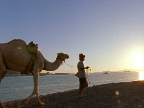 slow motion silhouette of man leading camel next to water at sunset/rise / Aden, Yemen