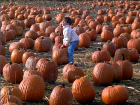 slow motion small boy in field of pumpkins trying to pick one up + failing / connecticut - cinematography stock videos & royalty-free footage