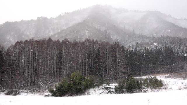 vidéos et rushes de ralenti: chute de neige dans le paysage de la montagne de fukushima au japon - neige fraîche