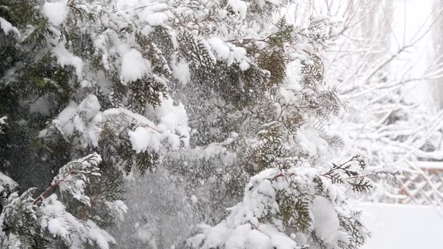 slow motion snow falling from pine trees - geographical locations stock videos & royalty-free footage