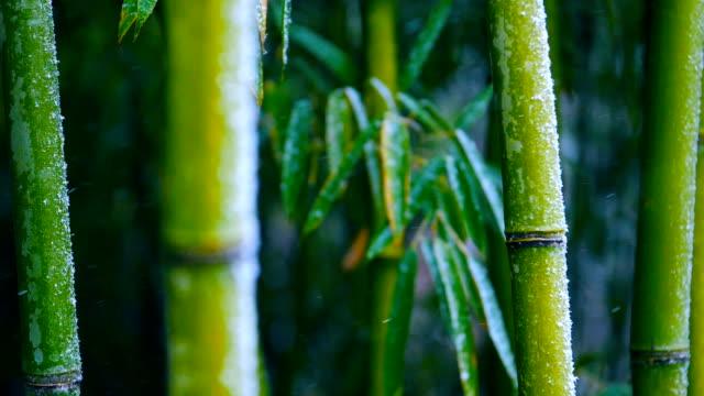 竹の枝にスローモーション雪 - 竹点の映像素材/bロール