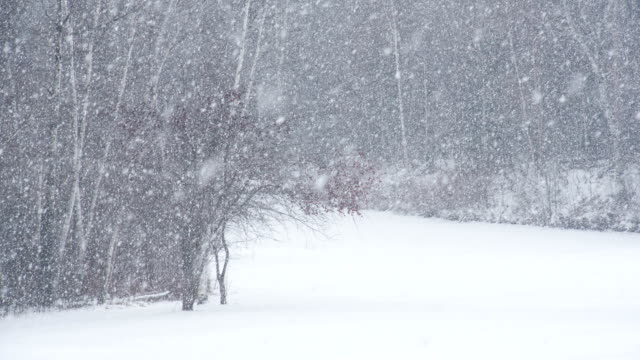 slow motion snow storm - snow storm stock videos and b-roll footage