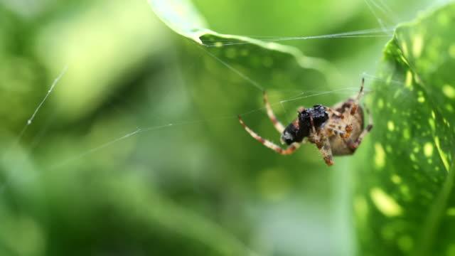 slow motion spider eating fly - 捕らわれる点の映像素材/bロール