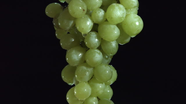 vídeos de stock e filmes b-roll de slow motion cu studio shot of a wet bunch of grapes slowly rotating on black background - juicy