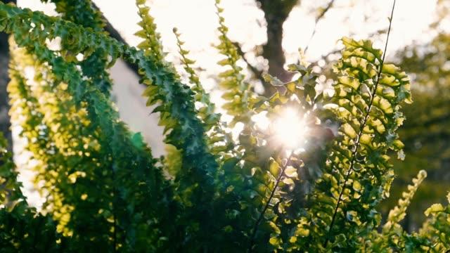 slow motion : sunbeams peaking through lush green leaves - tropical tree stock videos & royalty-free footage