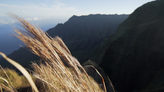 slow motion: sunny, tan stalks swaying in breeze by mountain, kauai, hawaii - tall high stock videos & royalty-free footage