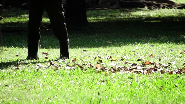 Slow motion: sweeping leaves, Autumn Chores