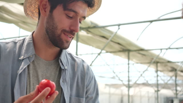 vídeos de stock, filmes e b-roll de 4k slow motion o proprietário da índia da fazenda é cheirar os tomates para verificar a qualidade antes de enviá-lo para venda. - tomato