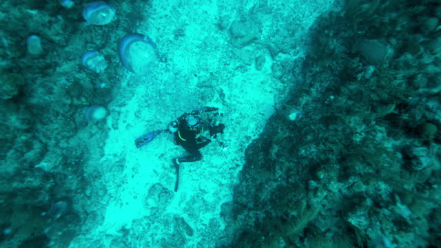slow motion top view: scuba diver with camera exploring coral - belize city, belize - aqualung diving equipment stock videos & royalty-free footage