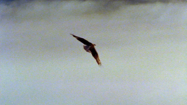 slow motion tracking shot long shot eagle flying over clouds + mountain tops / above boise basin, idaho - rovfågel bildbanksvideor och videomaterial från bakom kulisserna