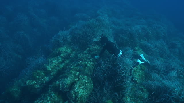 slow motion underwater shot of a scuba diver near the ocean floor amongst sea plants - aquatic organism stock videos & royalty-free footage