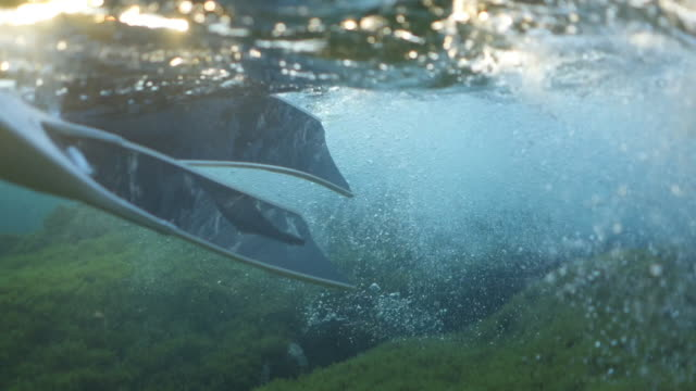 stockvideo's en b-roll-footage met langzame motie onderwater ontsproten van een duiker die dichtbij mossy rotsen dichtbij oppervlakte van de oceaan zwemt - zwemvlies