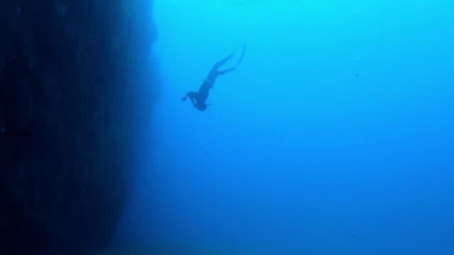 slow motion undervattensskott av en dykare som simmar till havsbotten - akvatisk organism bildbanksvideor och videomaterial från bakom kulisserna