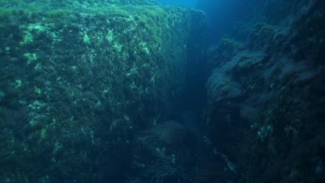vídeos y material grabado en eventos de stock de disparo submarino a cámara lenta de una cueva oceánica - grupo mediano de animales