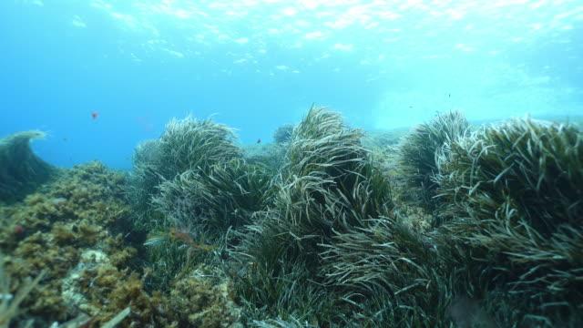 魚と海藻のスローモーション水中ショット - 海藻点の映像素材/bロール