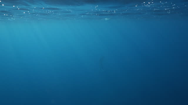 slow motion underwater wide shot of a scuba diver surfacing - livello di superficie video stock e b–roll