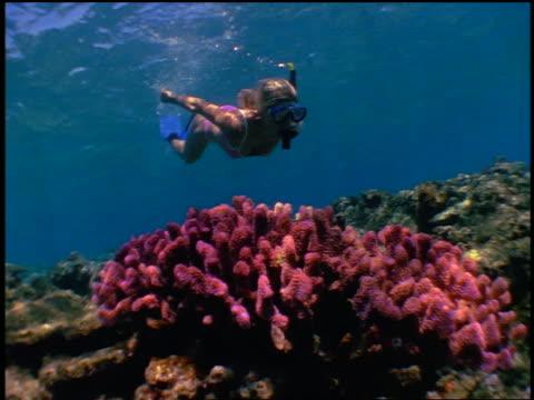 slow motion underwater woman in pink bikini snorkeling over coral on ocean bottom - ワンピース型の水着点の映像素材/bロール