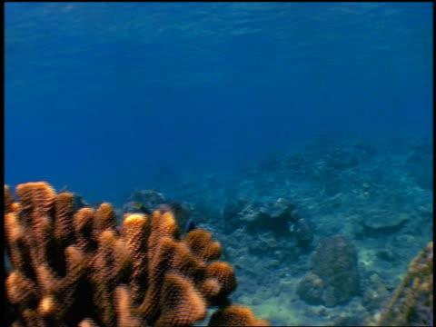 slow motion underwater woman in pink bikini snorkeling over coral reef - ワンピース型の水着点の映像素材/bロール