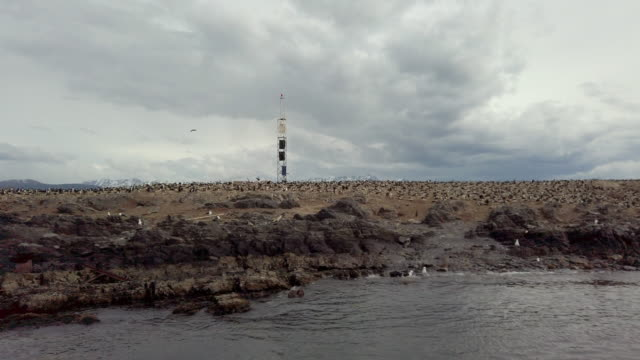 slow motion video of a lot of imperial shags near ushuaia, patagonia - sea bird stock videos & royalty-free footage