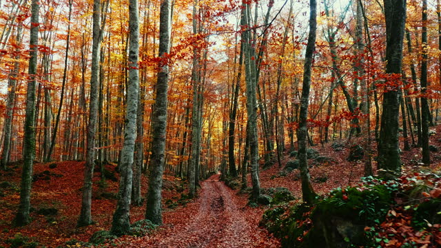 slow motion video of autumn forest - footpath stock videos & royalty-free footage