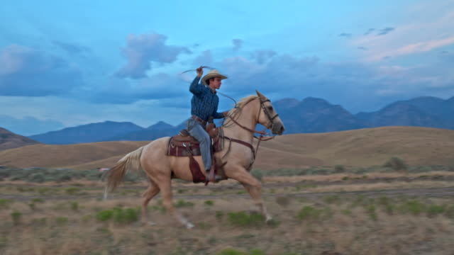 vídeos de stock, filmes e b-roll de vídeo de câmera lenta de cowboy a cavalo com laço na faixa de - laço acessório