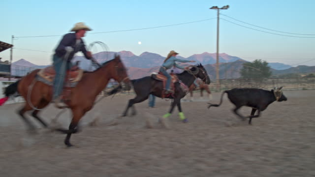 Slow motion video of cowboys lassoing cattle at rodeo