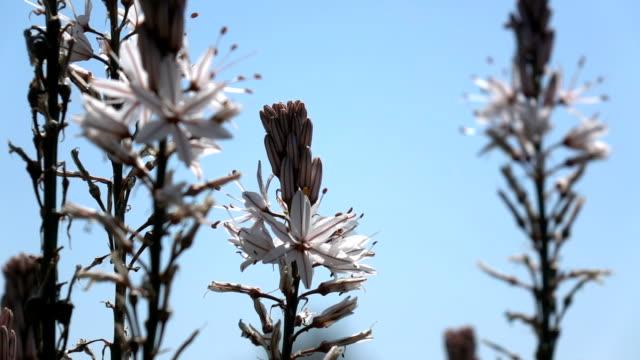 Slow Motion Video Of Honey Bee On Flower