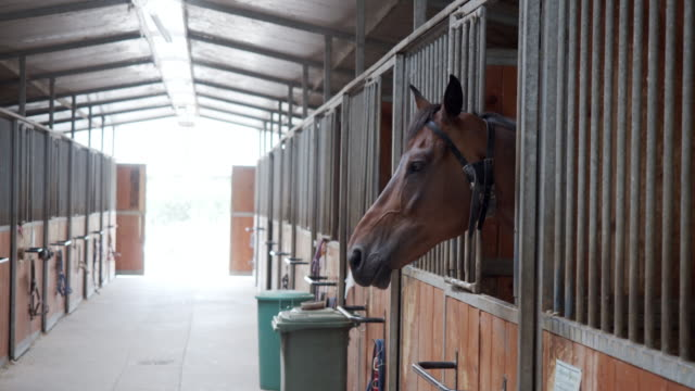 slow motion video of horse stalls in a horse riding school - bridle stock videos & royalty-free footage