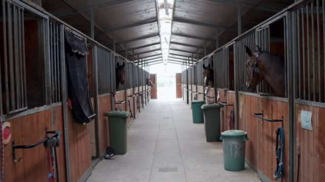slow motion video of horse stalls in a horse riding school - stable stock videos & royalty-free footage