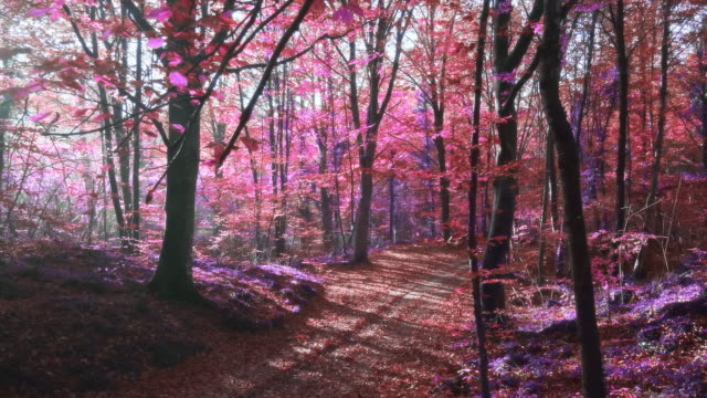 slow motion video of sunlight over an surreal purple forest - ethereal stock videos & royalty-free footage