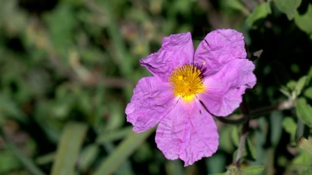 slow motion video of wild flower swaying in wind - selimaksan stock videos & royalty-free footage
