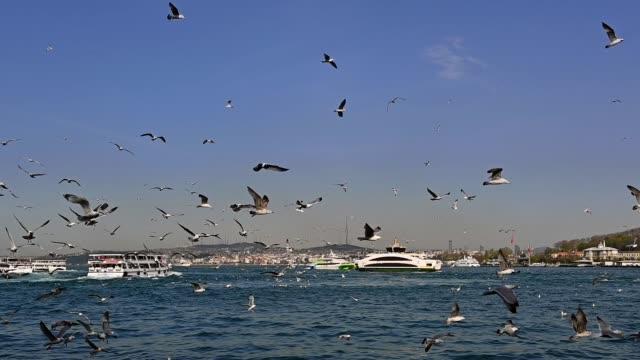 イスタンブール市とカモメのスローモーションビュー。 - イスタンブール 金角湾点の映像素材/bロール