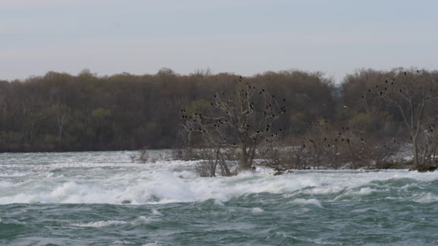 slow motion view of niagara river rapids - niagara falls city new york state stock videos & royalty-free footage