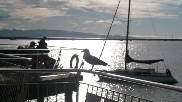 Slow motion views of Nelson waterfront including The Seafarer's Memorial