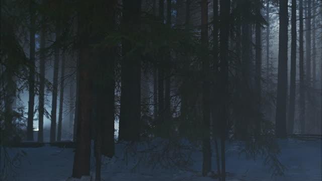 vidéos et rushes de slow motion walking point of view walking through woods in winter - conifère
