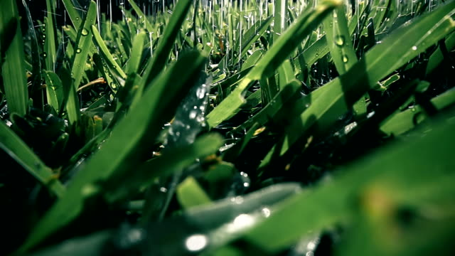 Slow motion water drops on green grass