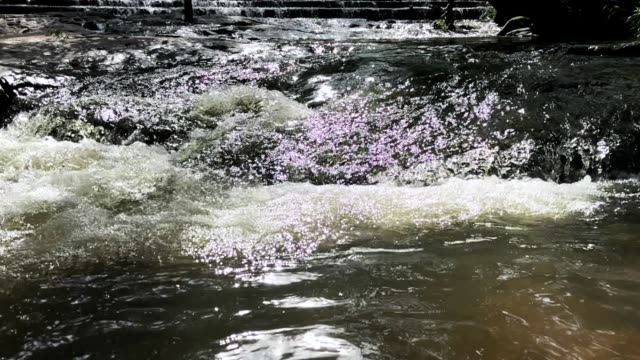 slow motion waterfall flowing stream over rock - named wilderness area stock videos & royalty-free footage