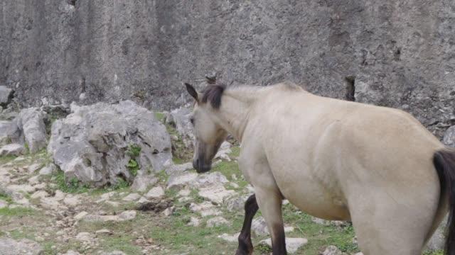vídeos de stock e filmes b-roll de slow motion: white horse with black markings wanders away from the shot - gaúcho