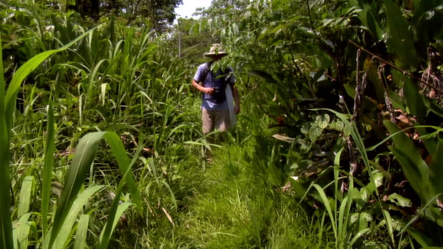 slow motion wide shot couple hiking in rainforest, walking toward camera/ the amazon, brazil - paar mittleren alters stock-videos und b-roll-filmmaterial
