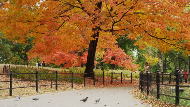 Slow motion wide shot of young woman running through pigeons in Central Park in autumn / New York City, New York, United States