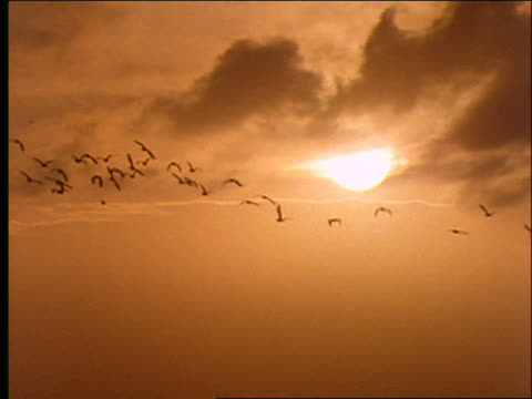 slow motion wide shot silhouette of flock of birds flying with sun in background - cinematografi bildbanksvideor och videomaterial från bakom kulisserna