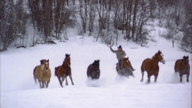 slow motion wide shot tracking shot herd of horses running through snow / rancher w/lasso riding behind them / colorado - cowboy stock videos & royalty-free footage