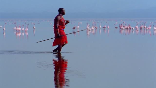 slow motion wide shot tracking shot masai tribesman walks through shallow water with flamingos in background / kenya - whatif点の映像素材/bロール