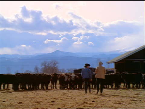 slow motion wide shot PAN two cowboys shaking hands by small herd of cattle on ranch / Colorado