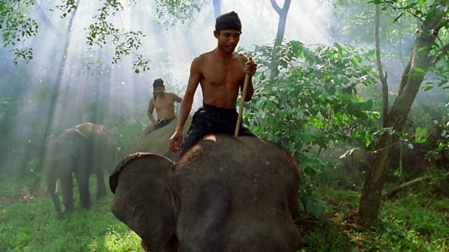 slow motion wide shot two men riding on backs of elephants / lampung, sumatra, indonesia - sparklondon stock videos and b-roll footage