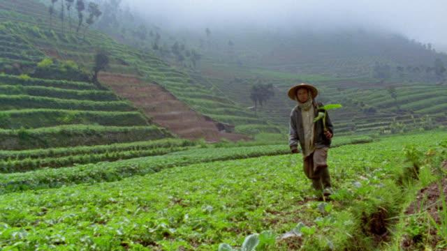 slow motion wide shot woman walking in lush cultivated field / foggy terraced hillside in background / Dieng, Java