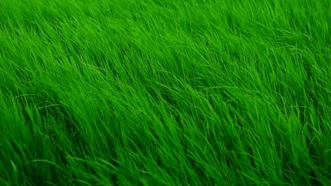 草原を吹き抜けるスローモーション風 - grass点の映像素材/bロール