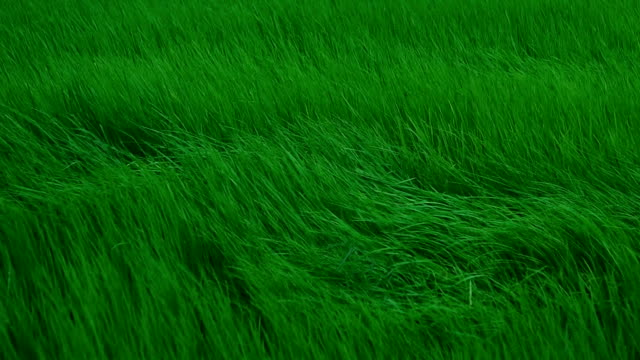 slow motion wind blowing through meadow - green colour stock videos & royalty-free footage