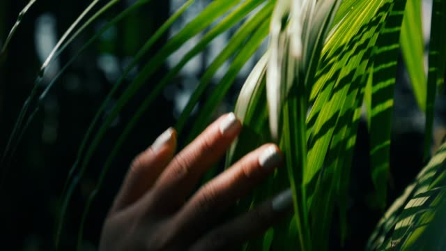 slow motion : woman hand touch green leaf in field - toccare video stock e b–roll
